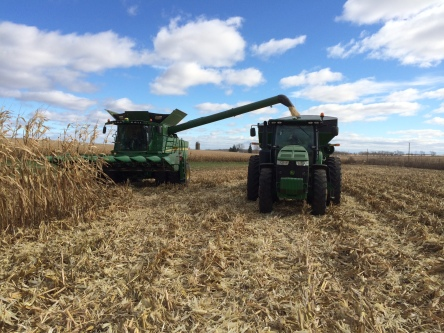 Schweigert Family Farms harvesting future tortilla chips (food-grade white corn) near the Illinois/Wisconsin Border
