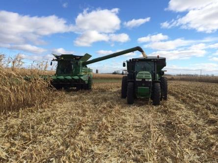 Schweigert Family Farms harvesting future tortilla chips (food-grade white corn) near the Illinois/Wisconsin Border