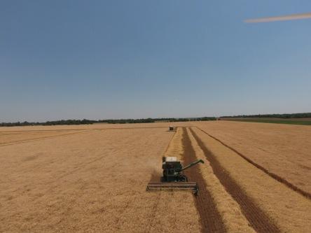 JD 95 Combine Harvesting Wheat in KS